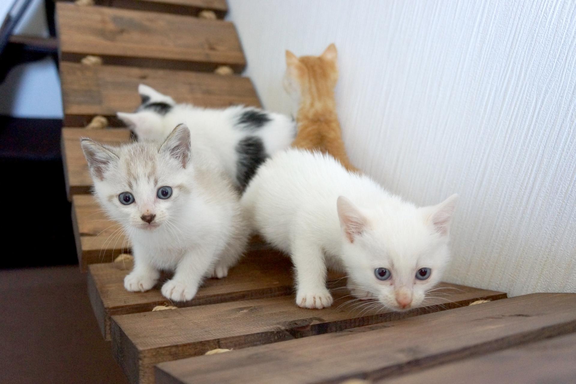 猫を3匹飼育する時のトイレの数、環境は?猫が仲良く暮らす方法