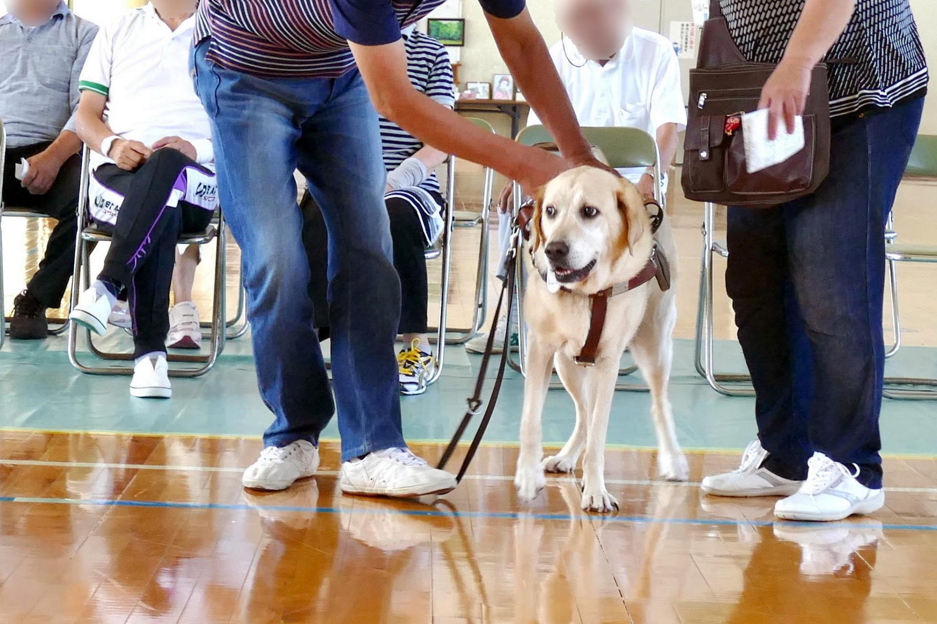 盲導犬の飲食店拒否は法律違反?拒否できる場合や知識