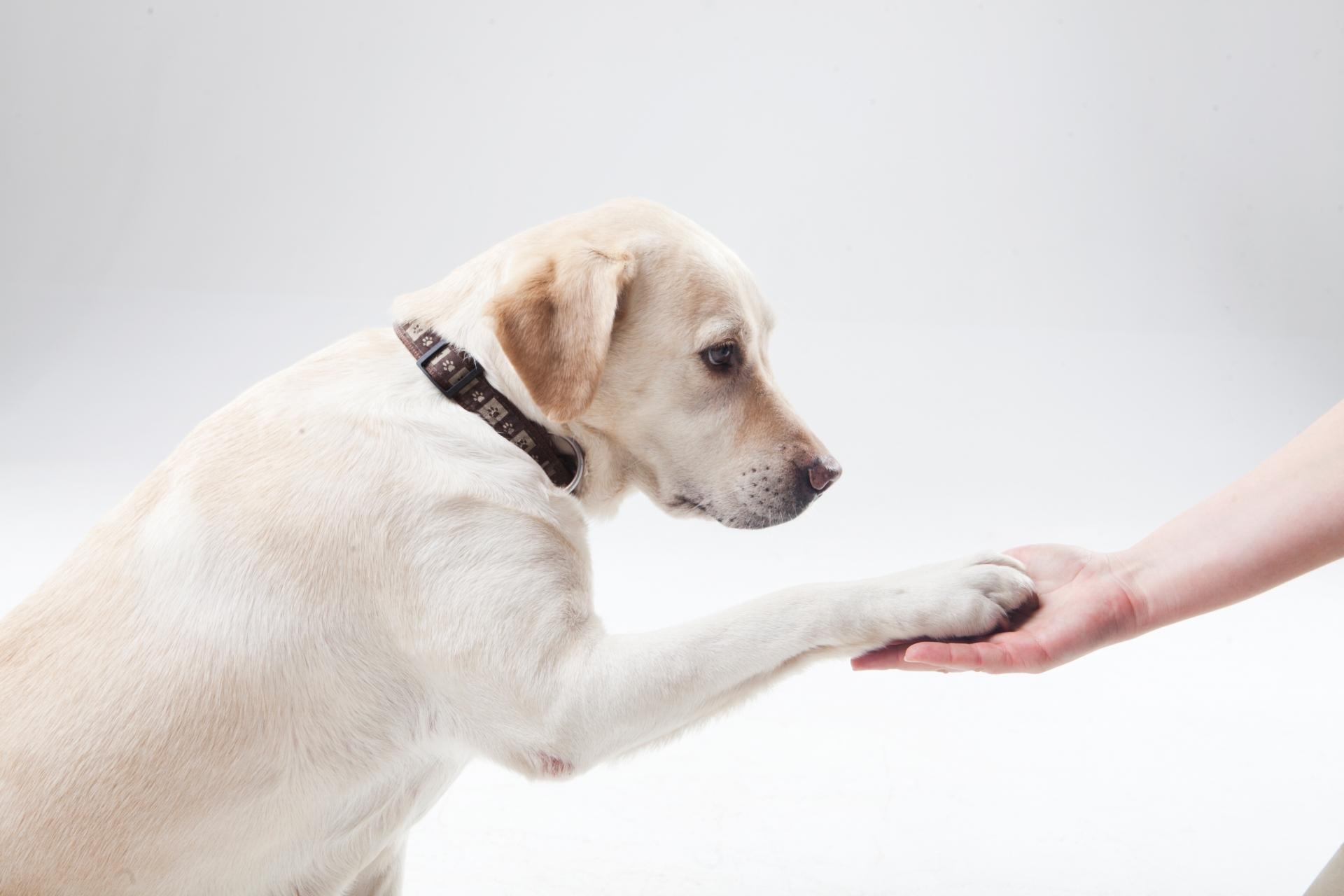 犬のゴミ箱あさり対策のオススメやそのコツと叱り方の注意点とは