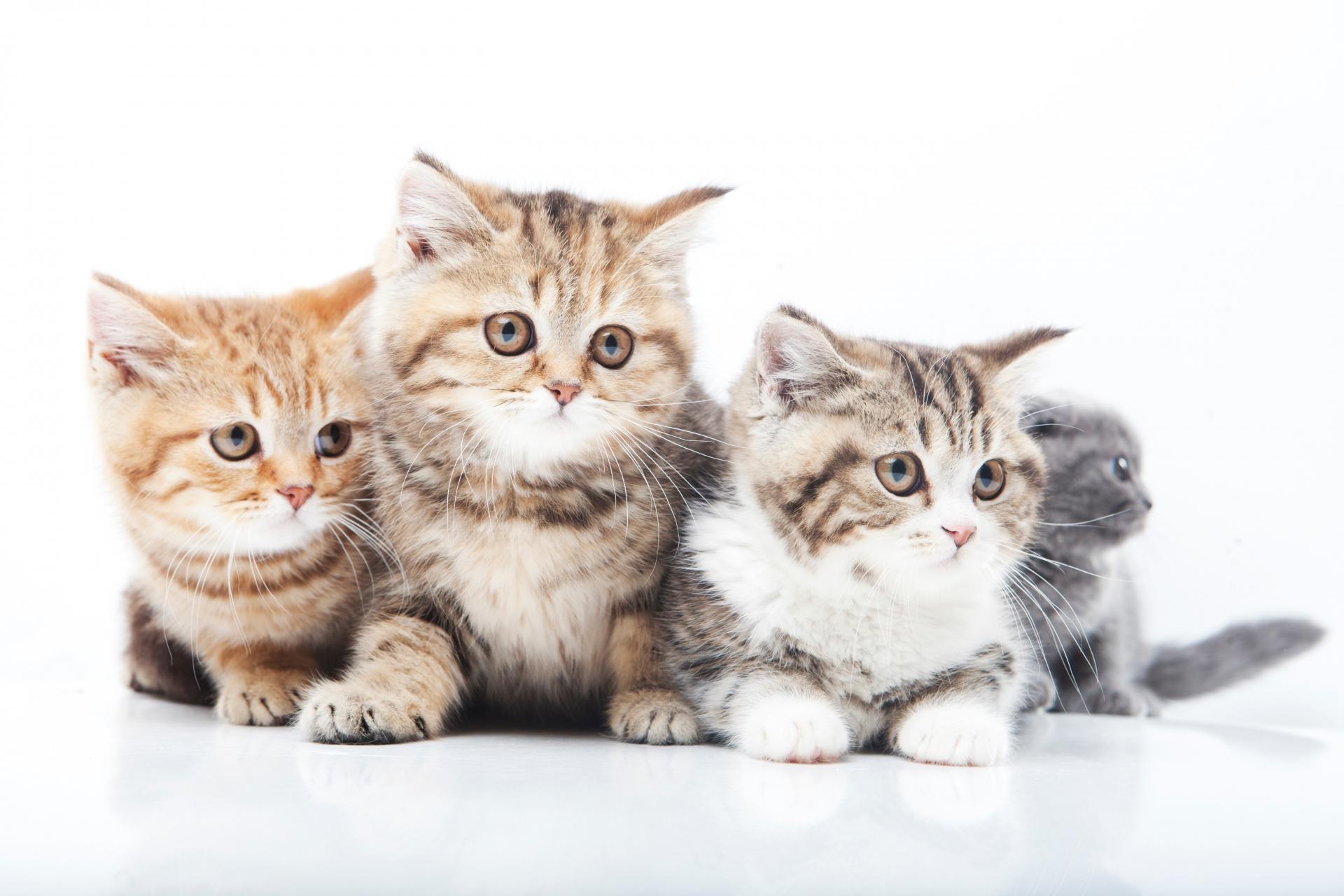 猫にご飯をあげたのにそれでも鳴く理由とやめさせる方法とは