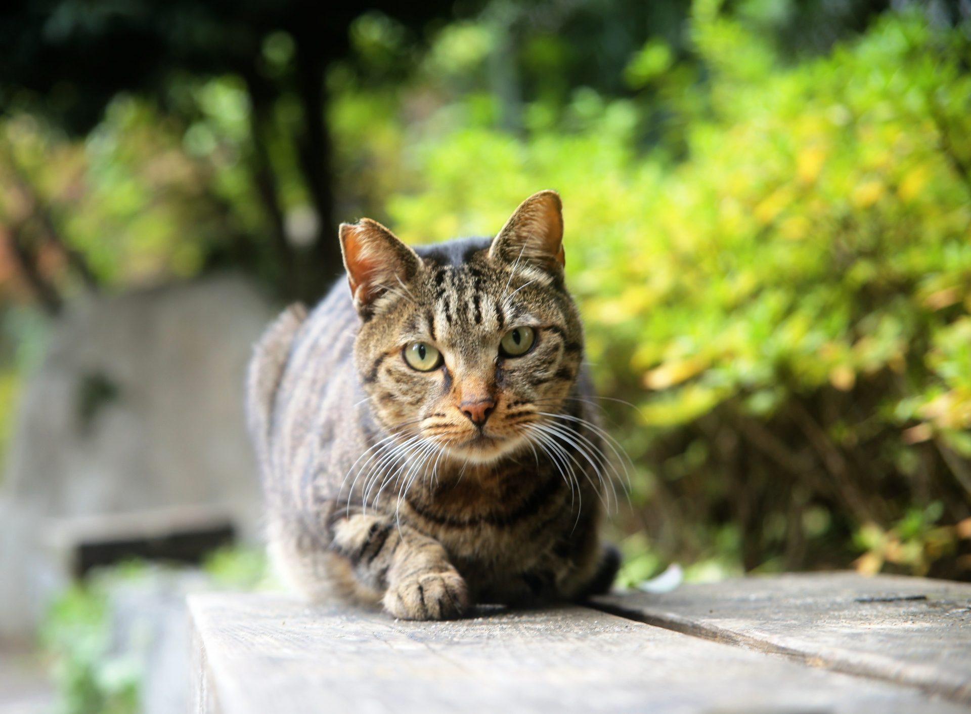 猫の行動範囲の距離は?行猫の動範囲といなくなった時の探し方