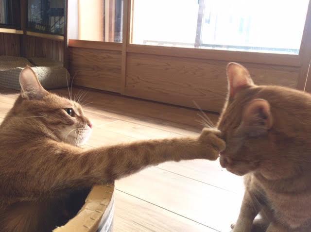 猫の喧嘩の仲裁の仕方!本気の喧嘩の場合の注意したいことや対策