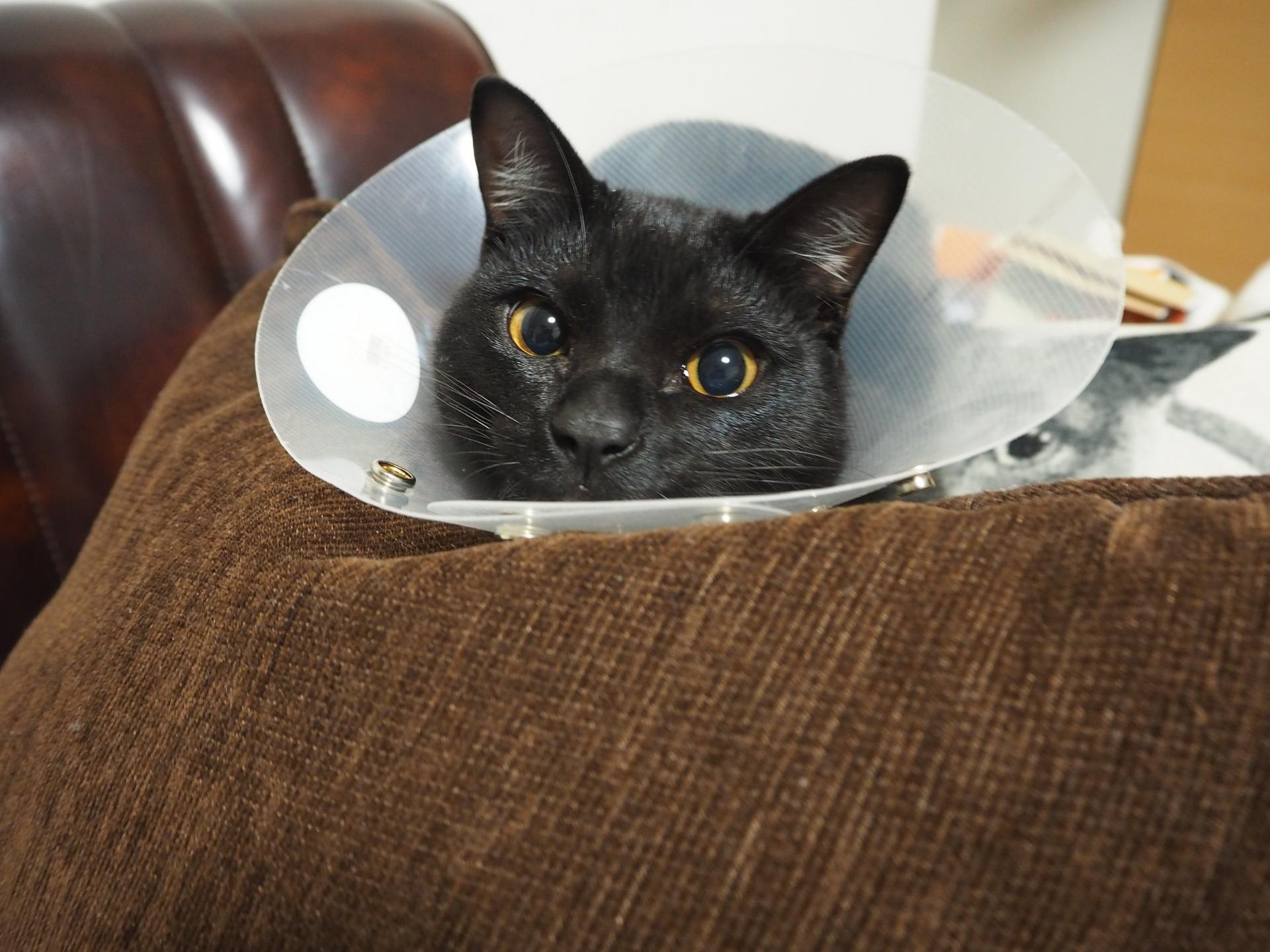 猫がエリザベスカラーのせいで水が飲めない時は食器に工夫