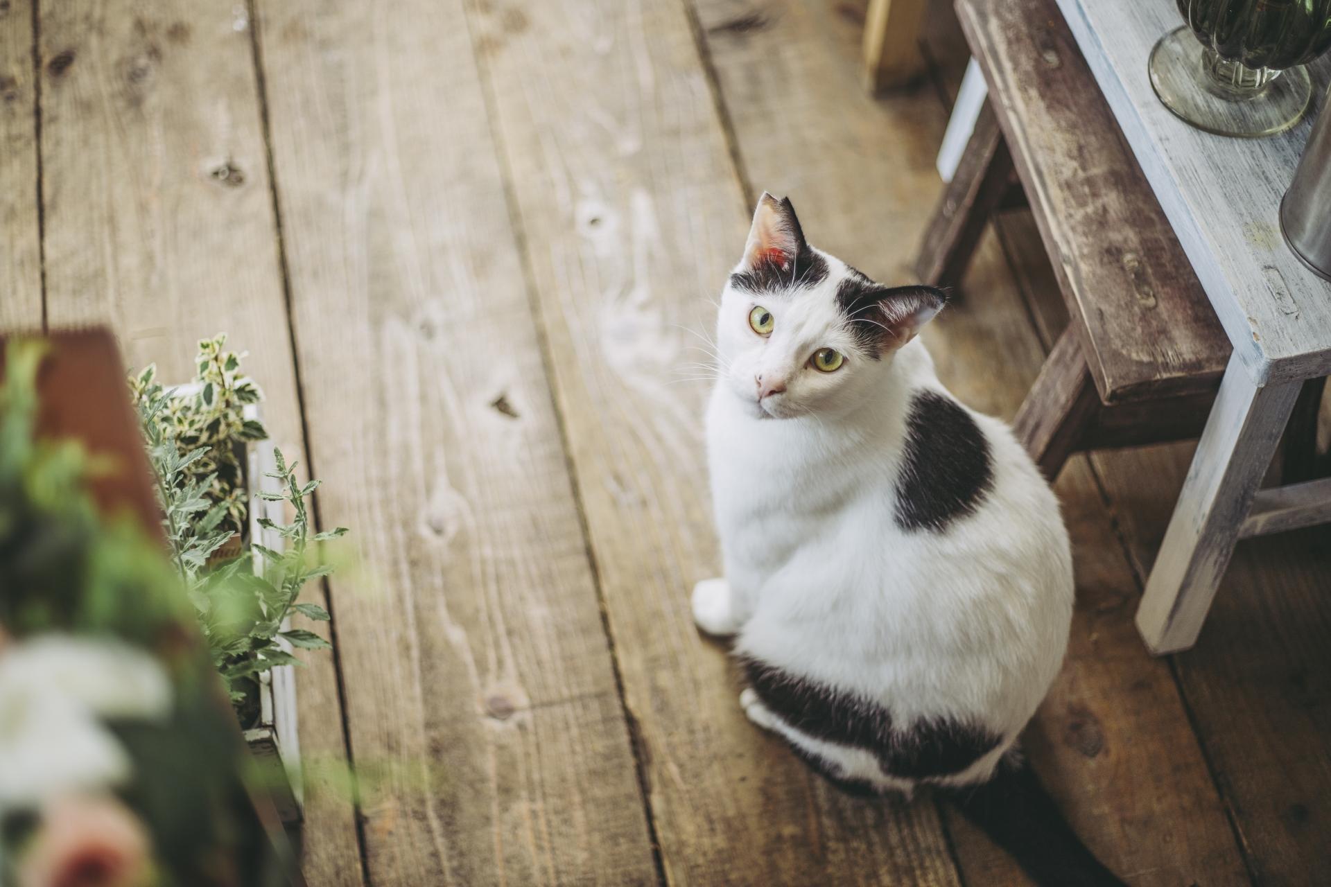 猫の鳴き声『ニャー』ではなく『んーんー』この鳴き声の意味とは