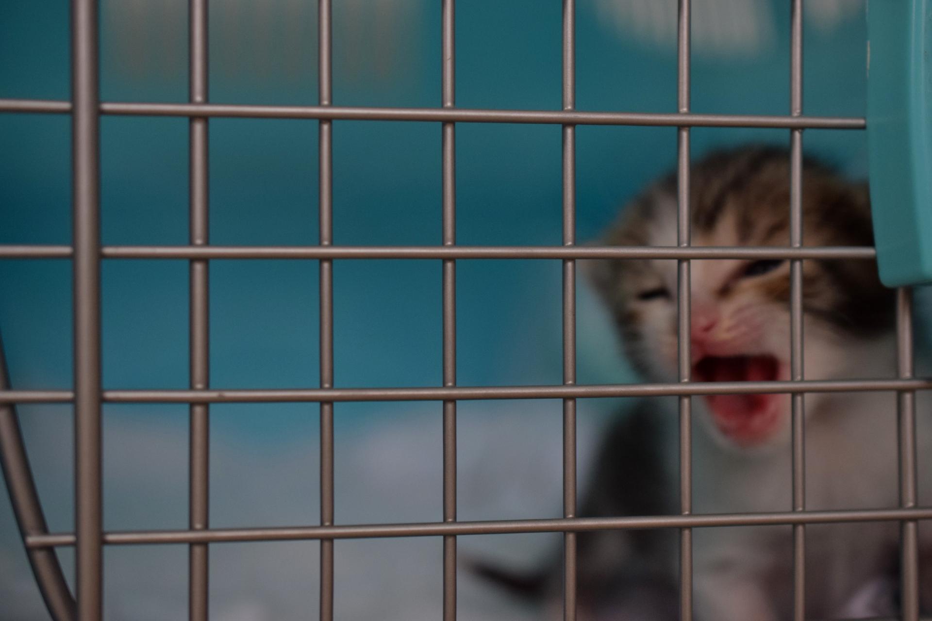 猫の保健所への持ち込みを減らすメリットやあなたができること