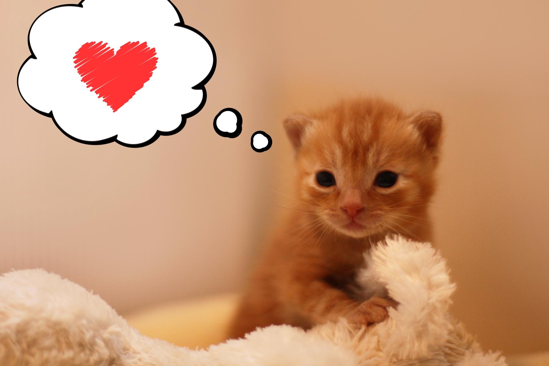 猫の父親は子育てしない!母猫の役割や猫の子育て期間について